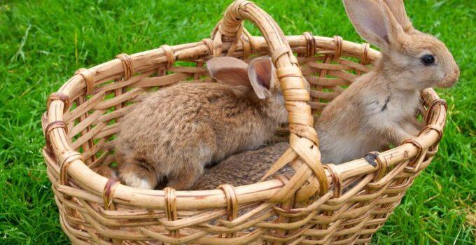 Køb billige kaniner til haven